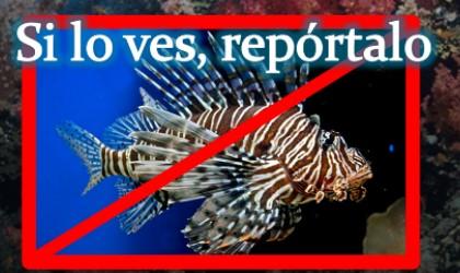 Panam se puede quedar sin peces en el caribe por el pez for Peces que se cultivan en estanques en panama